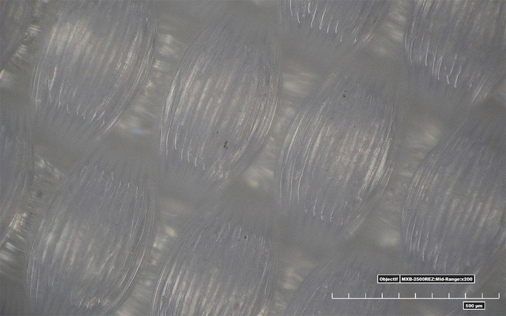 Observation des fibres d'une voile en dacron après le lavage